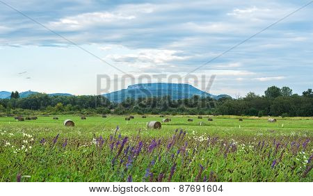 Early Autumn Field Landscape Of The North Balaton Region, Hungary