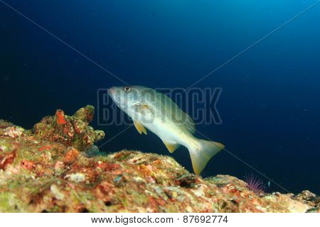 Coral and fish underwater in ocean