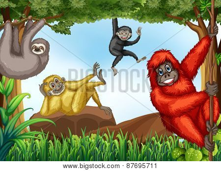 Monkeys climbing trees and sitting on rocks
