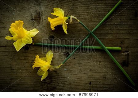 Three Narcissus Flowers On Brown Table