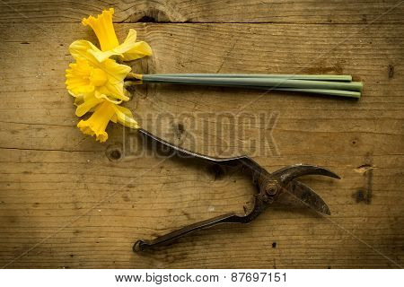 Scissor And Narcissus