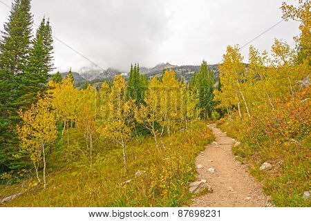 Fall Colors On A Mountain Trail