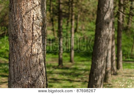 Tree in the forest