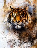 foto of tiger cub  - tiger collage on color abstract background rust structure wildlife animals eye contact - JPG