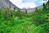 pic of conifers  - mountains and high alpine conifer forest in glacier national park in summer - JPG