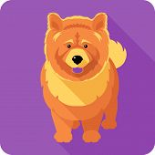 picture of chow  - Vector serious dog red chow - JPG