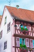 picture of stork  - pink half timbered house in alsace decorated with a stork - JPG