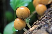 pic of toadstools  - toadstools growing on the trunk of a tree - JPG