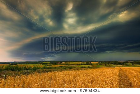Storm Clouds Over Wheat Field.