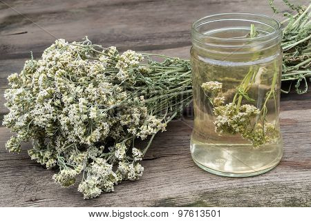 Dried Yarrow And Decoction For Herbal Medicine