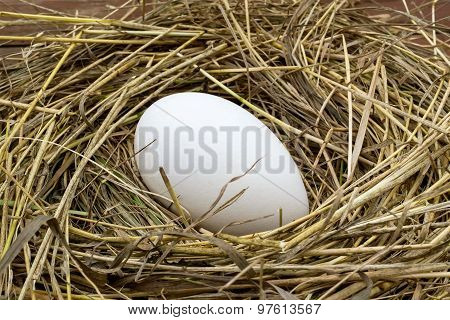 Big Goose Egg In A Nest Of Hay