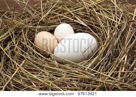 Chicken And Goose Eggs In A Nest Of Hay