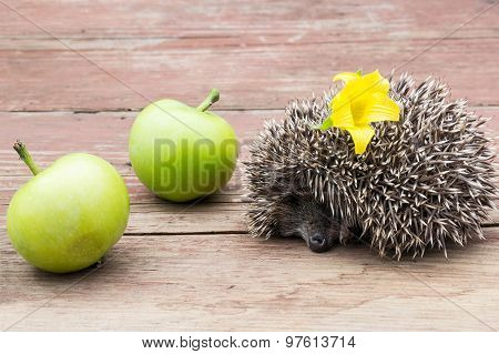 The Little Hedgehog With Flower And Apple On The Table
