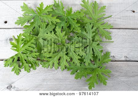 Scented geranium leaves natural mosquitoes repellent on a wooden table