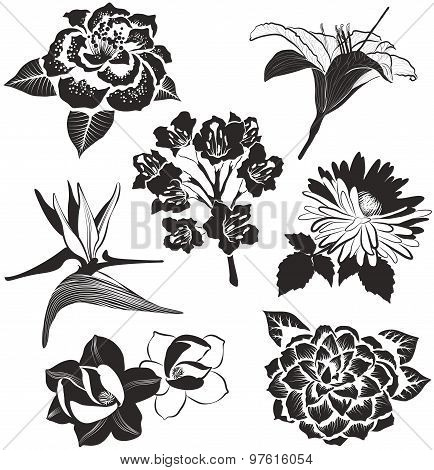 flowers in sketch style: aster, magnolia, Bird of Paradise flower, lily and camellia