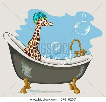 Giraffe Sitting In The Bathroom