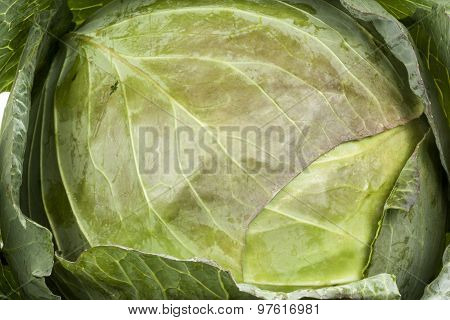 Closeup Of Heart Of Freshly Picked Green Cabbage