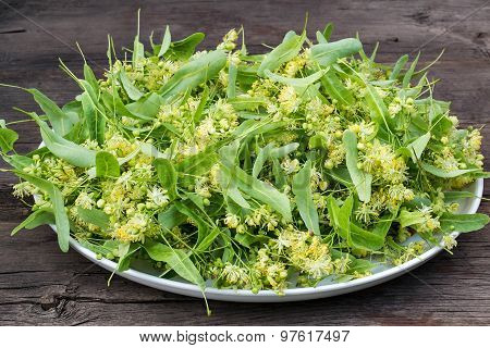 Linden Flowers On A Large Plate For Herbal Medicine