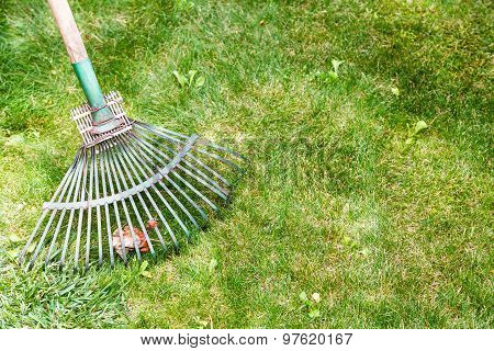 Raking Leaves From Green Lawn By Rake