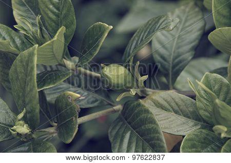 Bud on the bush