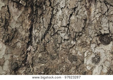 Close up of a cortex tree