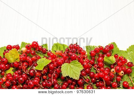 Red Currant. The Horizontal Edge