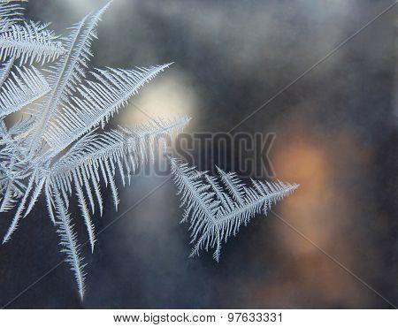 Ice Patterns On The Window