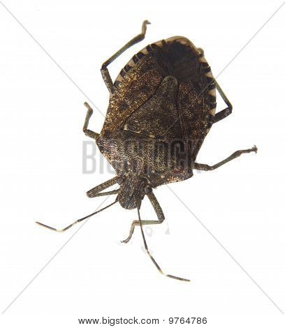 Ugly Insect