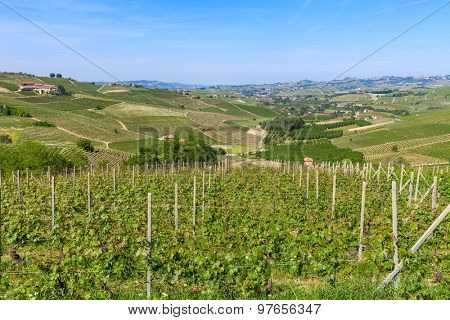 Green vineyard on the hills near Barolo in Piedmont, Northern Italy.