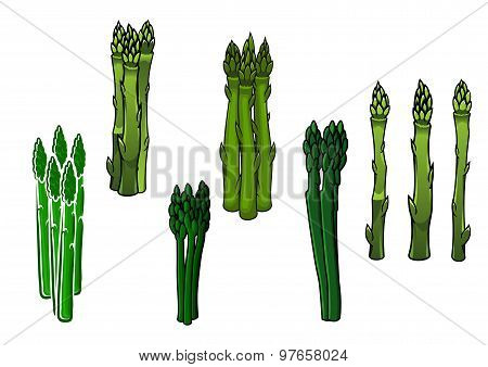 Green asparagus veggies with fleshy spears