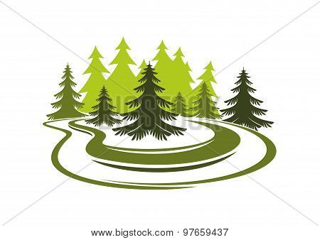 Forest glade with spruces on green grassy meadow