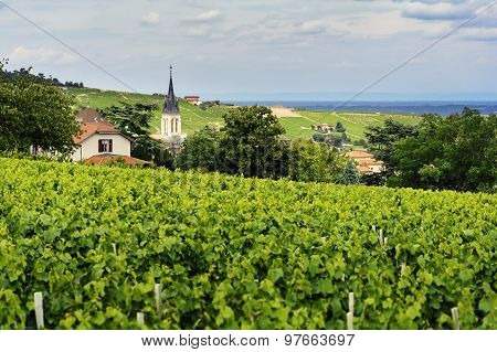Church Of Fleurie Village And Vineyards, Beaujolais, France