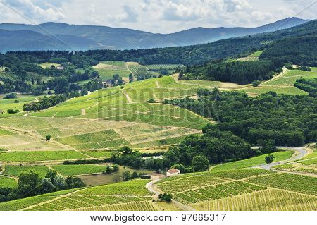 Hill And Vineyards, Beaujolais, France