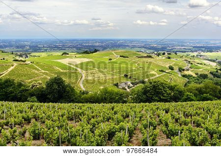 Hill And Vineyards During A Sunny Day, Beaujolais, France