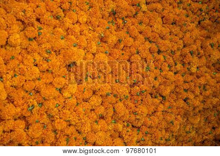 Yellow Marigold Flowerbed