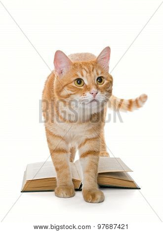 Big Red Cat And Book