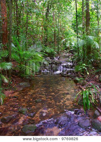 Daintree Rainforest - Queensland
