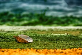 stock photo of ecology  - Open shell mussels oyster is on a sandy shore covered with green algae on sea green surf landscape ecology concept closeup hdr filter saturation - JPG