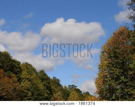 Anjean Sky Trees
