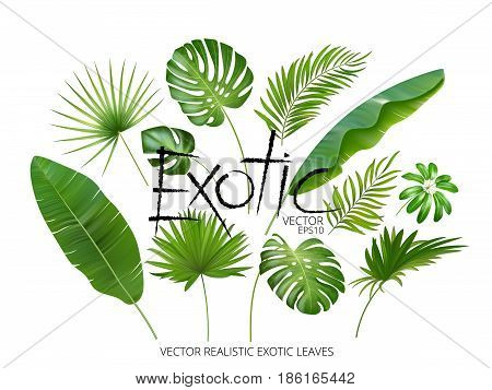 poster of Vector tropical exotic leaves, realistic jungle leaves set isolated on white background. Palm leaf collection. Quality watercolor imitation. Not trace