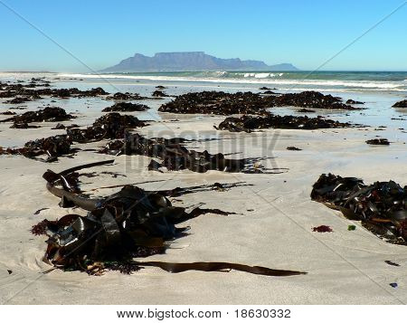Table Mountain, Cape Town, South Africa from a kelp strewn beach.