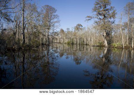 Swamp 18