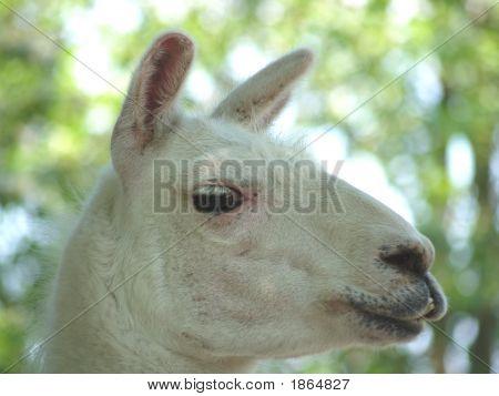 Horse Half Rabbit
