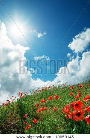 Hill of poppies and deep sky. Composition of nature.