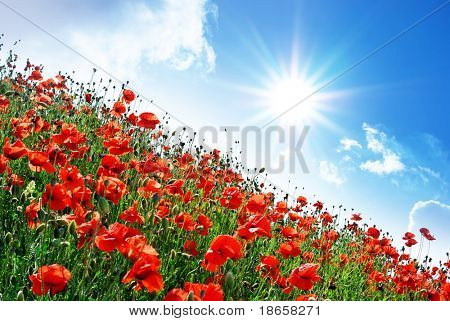 Poppies hill and sunny sky. Composition of spring nature.