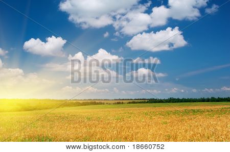 Spring yellow meadow. Nature composition.
