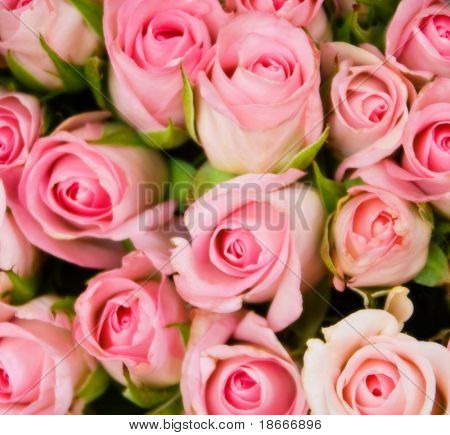 Bouquet of roses soft focus, background motifs