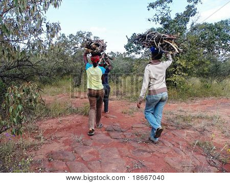 In the villages near Kalahari Desert the young girls still gather the firewood from the bush
