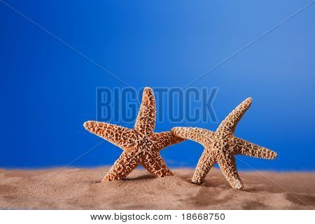 two starfish on a beach sand - concept of love, friendship, holiday or something more. Shallow DOF