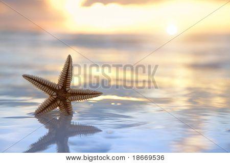 seestern Shell im Meer bei Sonnenaufgang-Hintergrund